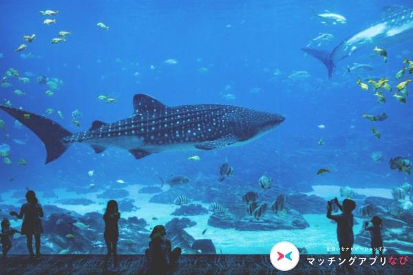 マッチングアプリ 初デート 場所 水族館